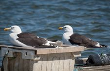 Free Two Seagulls On A Pier Royalty Free Stock Images - 15164399
