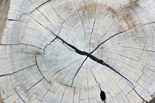 Free Texture Of Wood Royalty Free Stock Image - 15164406