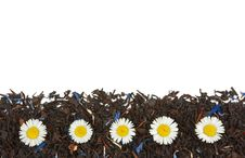 Free Flowers On The Dry Tea Leaves Background Royalty Free Stock Photography - 15164637