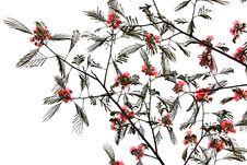 Free Hibiscus Stock Photos - 15164883