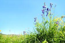 Outdoor Wild Grass Royalty Free Stock Photo