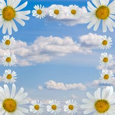 Free Frame Of Daisies Stock Images - 15166514