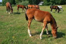 Free Horses And Colt On The Farm Royalty Free Stock Photo - 15166985