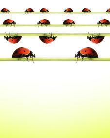 Free Ladybugs On Grass Isolateds Royalty Free Stock Image - 15167136