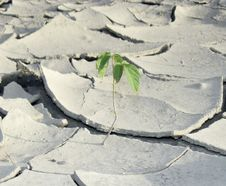 Sprout On The Cracked Dry Soil Stock Photography