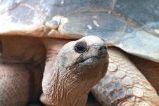 Free Tortoise Royalty Free Stock Photo - 15171055