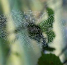 Free Spiderweb Stock Photography - 15171722