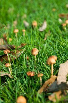 Free Small Mushrooms Royalty Free Stock Image - 15172676