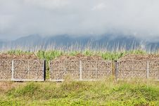 Sugar Cane Train Filled With Cane Harvest. Royalty Free Stock Photography