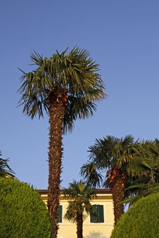 Palm Tree In Lazise, Veneto, Italy, Europe Stock Photo