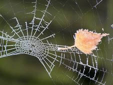Free Frosted Spider Web Royalty Free Stock Photos - 15176468