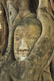 Free Buddha Heads Stock Photos - 15176743