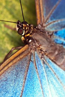Free Butterfly Stock Photo - 15177150