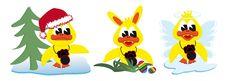 Xmas Easterbunny And Angel Ducks Royalty Free Stock Photo