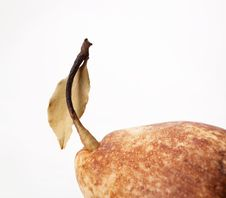 Free Pear Stock Photo - 15177950