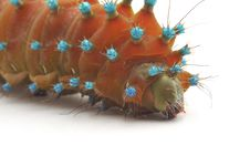 Free Isolated Caterpillar Stock Images - 15178494