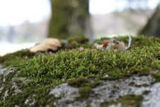 Free Green Moss On Large Rock Royalty Free Stock Image - 15178836