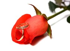 Free Rose And Wedding Rings Stock Images - 15178964