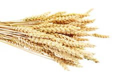 Free Wheat Stock Photo - 15179740