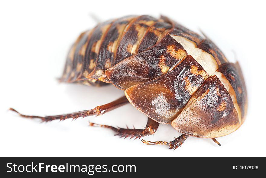 Beetletry
