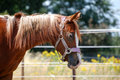 Free Brown Horse Stock Photography - 15188122