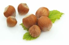 Free Wood Nuts Stock Images - 15180164
