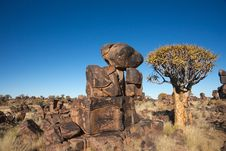Tree And Rocks Stock Photography