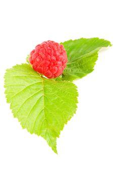Free Raspberry Royalty Free Stock Image - 15181716