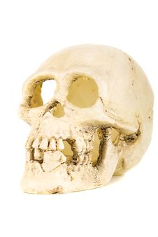 Free Plastic Skull Stock Photography - 15181732