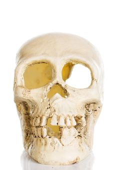 Free Plastic Skull Stock Photography - 15181882