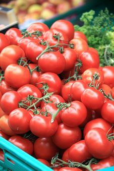Free Tomatoes Stock Images - 15182464