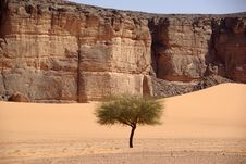 Free Tree In The Desert, Libya Stock Photo - 15182600