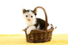 Free Baby Kitten In A Basket Stock Photos - 15182933