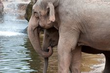 Free Elephant, Mother And Baby Stock Photography - 15184302