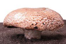 Free Mushroom Royalty Free Stock Image - 15184386