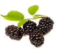 Free Blackberries Stock Photo - 15186120