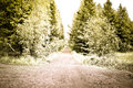 Free Creative Forest Road Stock Images - 15191264