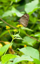 Free Butterfly Pollination Stock Photos - 15191453