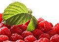 Free Raspberry On Isolated Stock Photo - 15192240