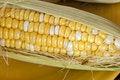 Free Corn On The Cob Royalty Free Stock Photos - 15196228