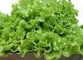 Free Salad Royalty Free Stock Photos - 15196578