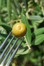 Free Fork With Green Olives And Olive Tree Stock Photo - 15198940