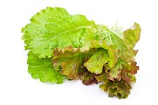 Free Fresh Lettuce Salad Stock Photos - 15190273