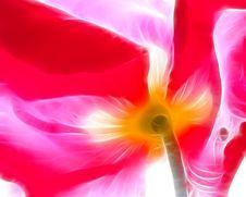 Free Poppy(0).jpg Stock Photo - 15190340