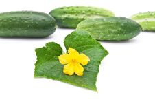 Free Fresh Cucumbers Royalty Free Stock Images - 15190349