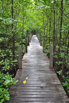 Free Mangrove Forest Boardwalk Stock Photo - 15190640