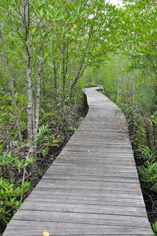 Free Mangrove Forest Boardwalk Royalty Free Stock Photo - 15190675