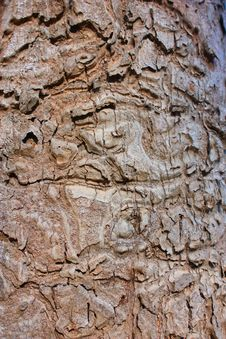 Free Bark Stock Photos - 15190813