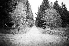 Free Black And White Forest Road Royalty Free Stock Images - 15191289
