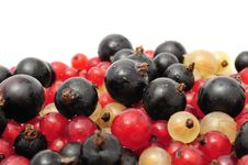 Free Black, Red And White Currants Royalty Free Stock Images - 15193259